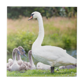 White mother swan with young chicks ceramic tile