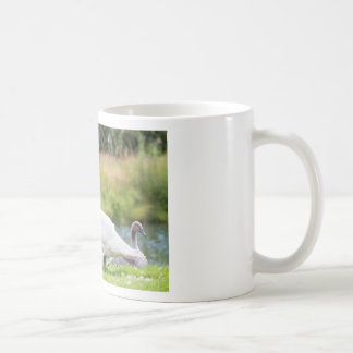 White mother swan with young chicks coffee mug