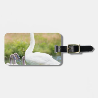 White mother swan with young chicks luggage tag