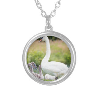 White mother swan with young chicks silver plated necklace