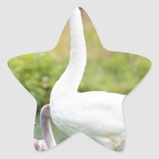 White mother swan with young chicks star sticker