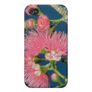 White Mountain apple (Eugenia malaccensis) flowers iPhone 4 Cover