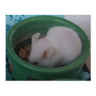White Mouse in Food Bowl Postcard