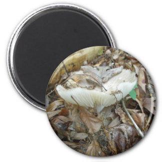White Mushroom Coordinating Items 6 Cm Round Magnet