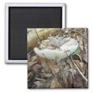 White Mushroom Coordinating Items Square Magnet