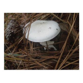 White Mushroom OBX Postcard