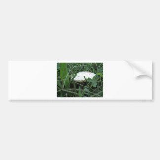 White mushroom on a green meadow bumper sticker