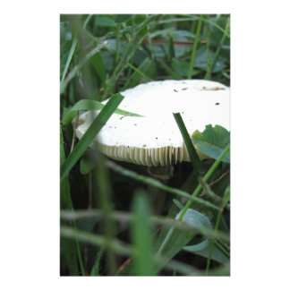 White mushroom on a green meadow personalised stationery