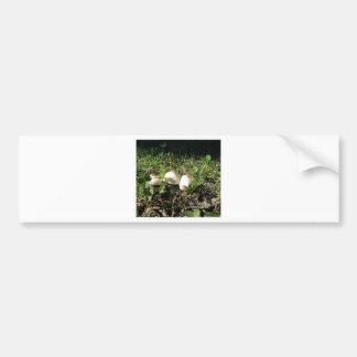 White mushrooms on green background bumper sticker