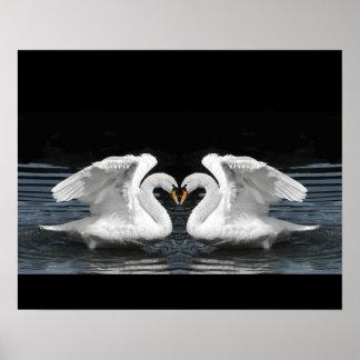 White Mute Swan Mirror Image Poster
