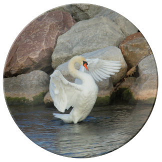 White Mute Swan Porcelain Plates