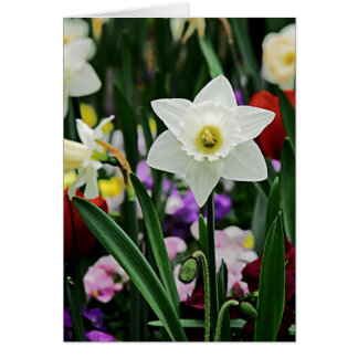 White Narcissus Card