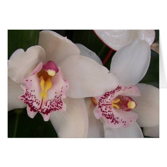 White Orchid Blank Card