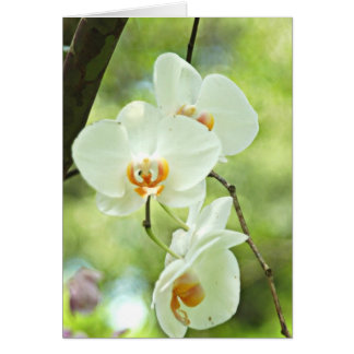 White Orchid Card