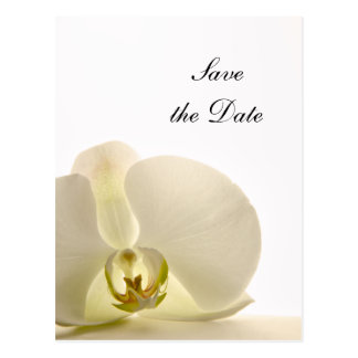 White Orchid Flower Wedding Save the Date Postcard
