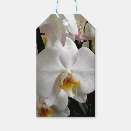 White Orchid Gift Tags