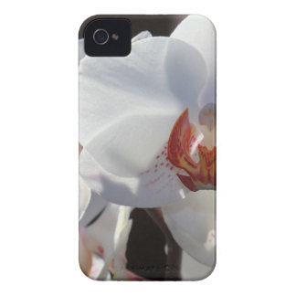 White Orchid iPhone 4 Cover