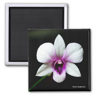 White Orchid Magnet