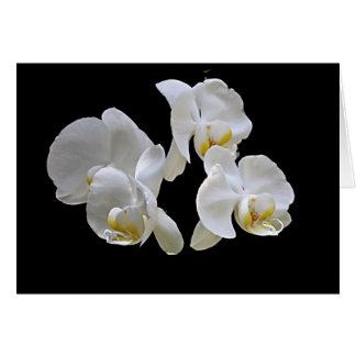 White Orchid on Black Card