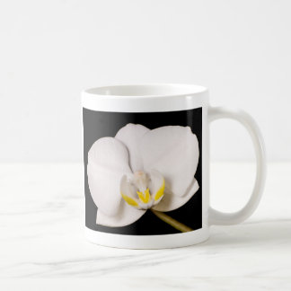 White Orchid on Black Mugs