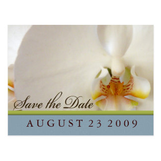 White orchid save the date postcard