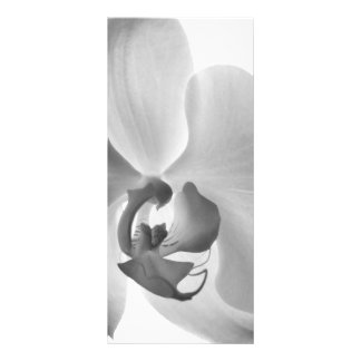 White Orchid Wedding Program Rack Cards