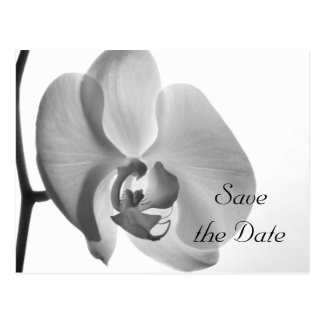 White Orchid Wedding Save the Date Postcard