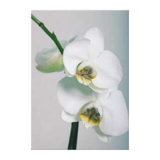 White orchids canvas picture canvas print