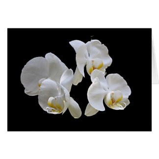White Orchids on Black - Elegant Card