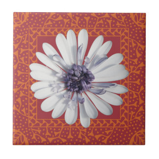 White Osteospermum (D) in Peach Frame Tile