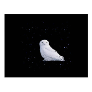 white owl in space postcard