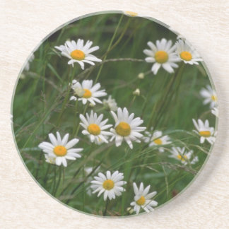 white Oxeye daisy flowers Drink Coaster