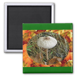 White Parasol Mushroom Coordinating Items Square Magnet