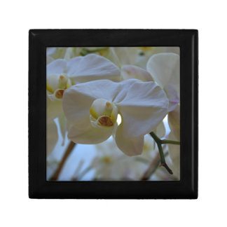 White Peabody Orchid III Small Square Gift Box
