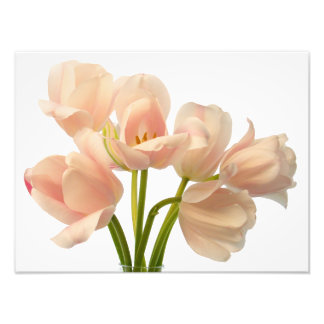 White & Peach Parrot Tulips Background Customized Photo Print