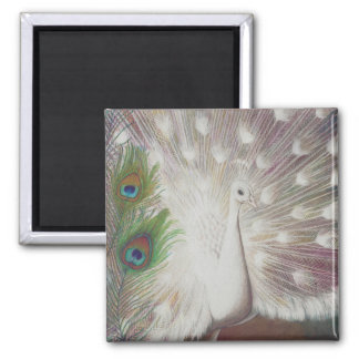 White Peacock and Green Peacock Feather art Print Magnet