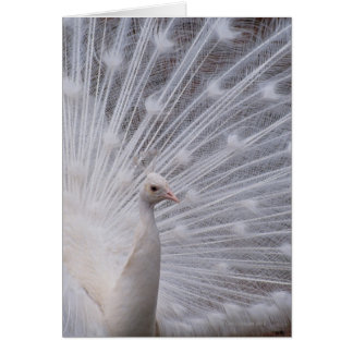 White Peacock Card