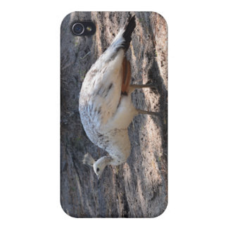 white peacock iPhone 4/4S covers