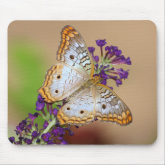 White Peacock on Purple Mouse Pad