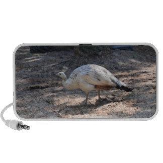 white peacock notebook speakers