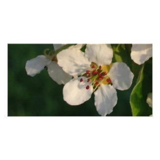White Pear Blossom Card Custom Photo Card