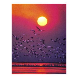 White Pelican in Haze Flyers