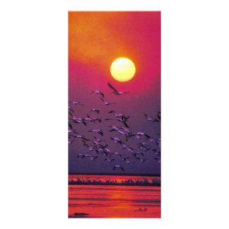 White Pelican in Haze Custom Rack Card