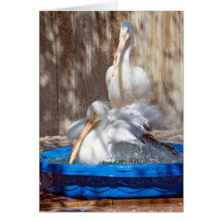 white pelican in pool card