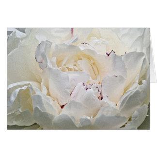 White Peony Blank Photograph Greeting Card