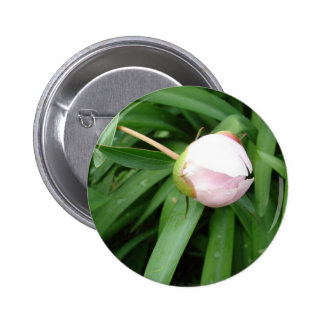 White Peony Bud Button