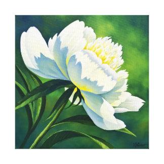 White Peony - canvas 12x12