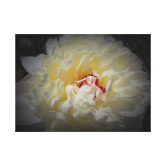 White Peony with Black Background on Canvas