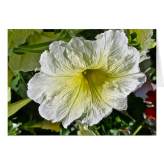 White Petunia Series Coordinating Items Note Card