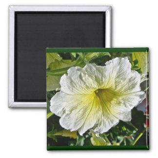 White Petunia Series Coordinating Items Square Magnet